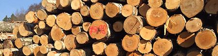 Roundwood